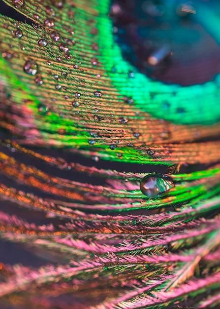 Water droplets on the colorful plumage backdrop Free Photo