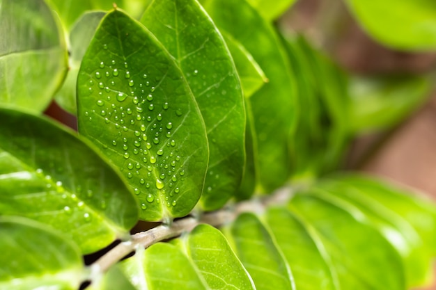 Water droplets on a leaf of a plant after spraying. Premium Photo