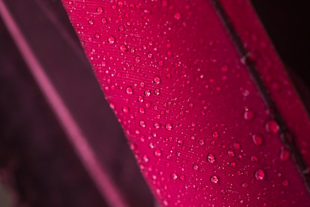 Water droplets on the pink feather surface Free Photo