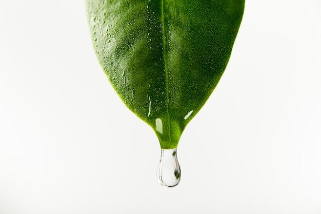 잎에서 떨어지는 물 프리미엄 사진