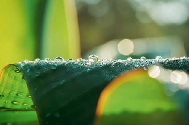 Water drops on green leaf for background. Premium Photo