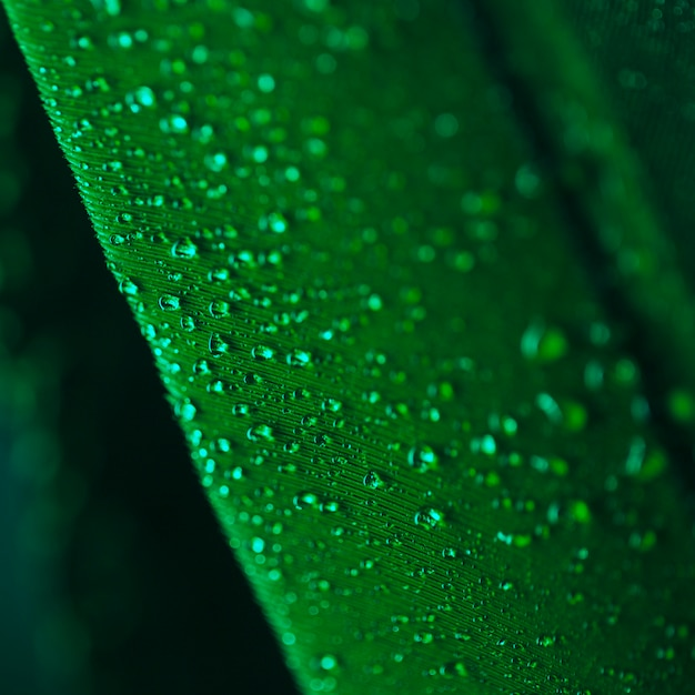 Water drops on the surface of green plumage Free Photo