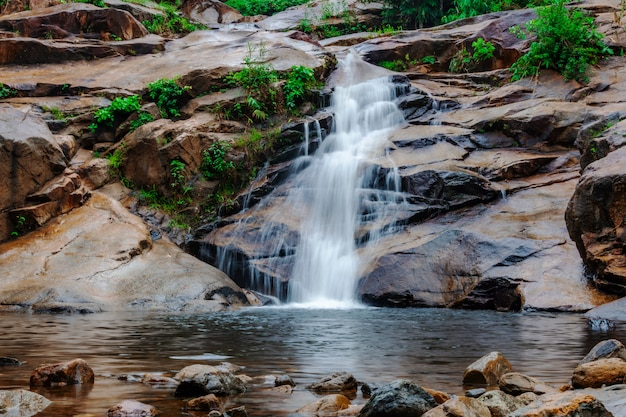 Water fall in forest with green tree nature Premium Photo