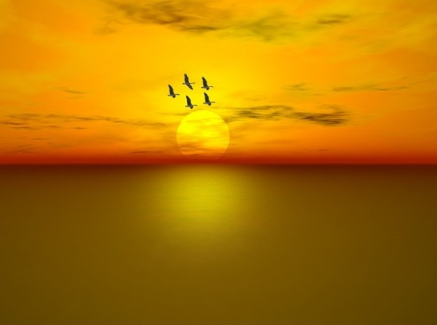 Water flying sea sunset ocean clouds geese sky Free Photo