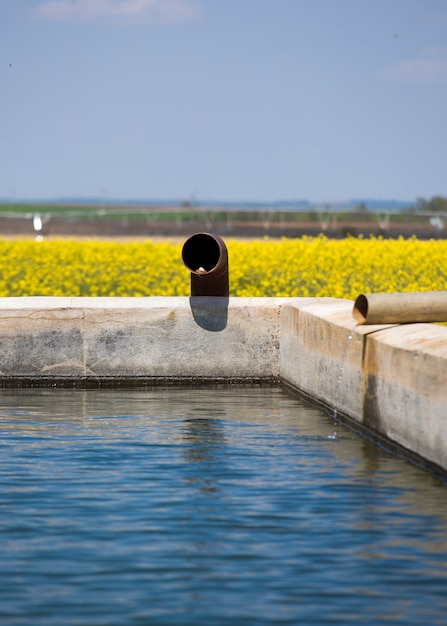 Water for irrigation Premium Photo
