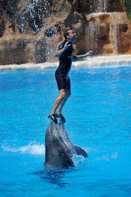 ロロパークでイルカと水ショー Premium写真