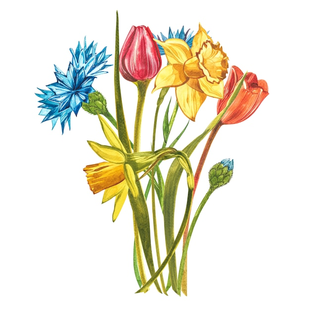 Акварельный букет с нарциссами, тюльпанами и георгинами Premium Фотографии