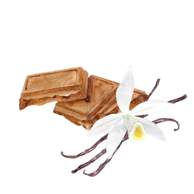 Акварельные кусочки шоколада с цветком ванили Premium Фотографии