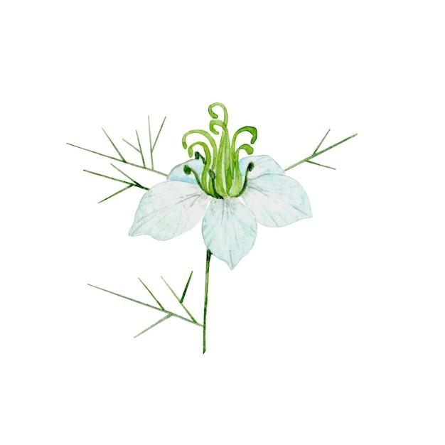 水彩クミン植物 Premium写真