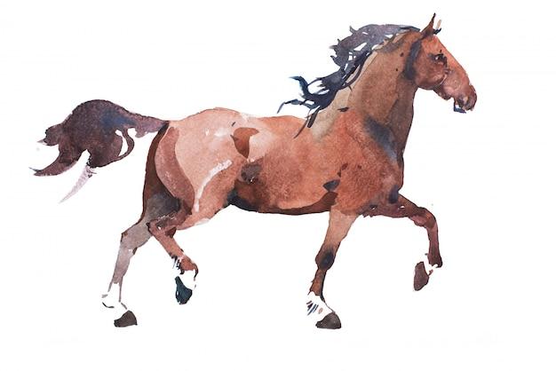 Watercolor drawing of jogging horse Premium Photo