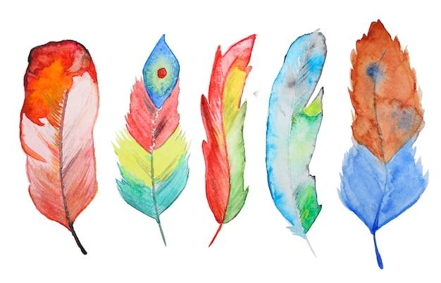 Watercolor feathers Premium Photo