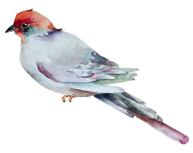 Watercolor hand drawn bird isolated on white bacground. Premium Photo
