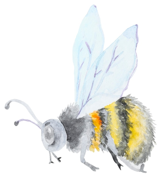 Watercolor hand drawn bumblebee isolated on white background Premium Photo