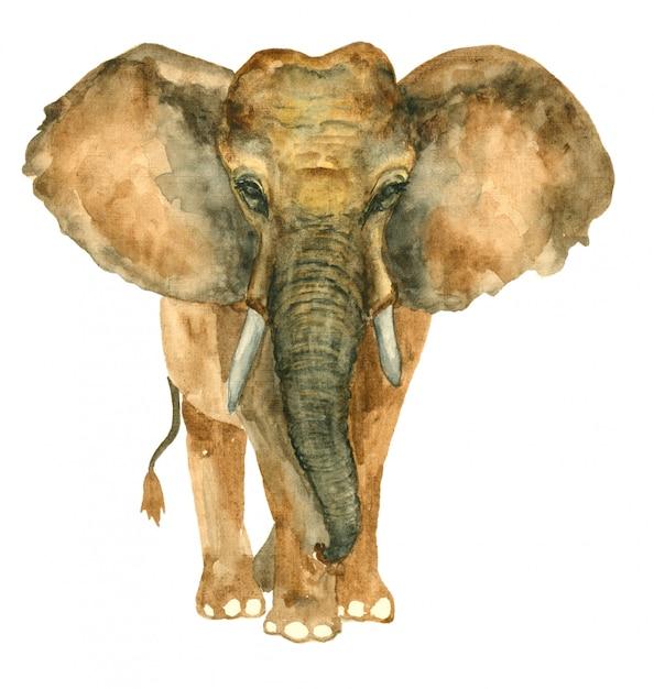 Watercolor hand drawn elephant Premium Photo