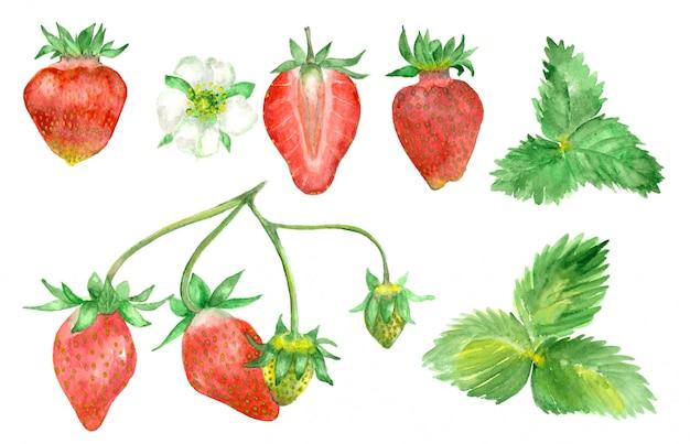 Watercolor hand drawn strawberry Premium Photo