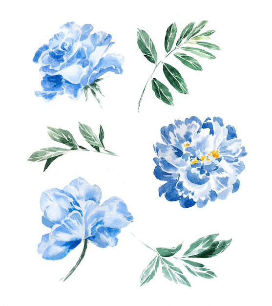 Watercolor hand painted navy blue peonies and greenery clipart set isolated. beautiful flowers and leaves design. Premium Photo
