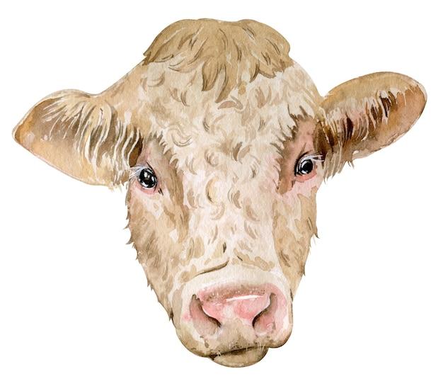 分離されたシャロレー牛の水彩画の頭 Premium写真