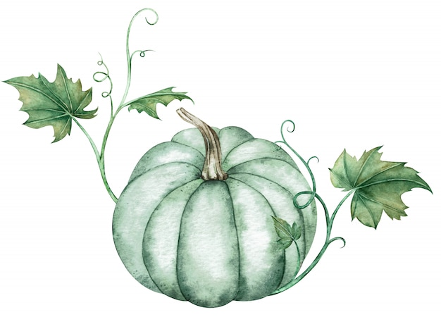 Watercolor illustration of blue pumpkin with green leaves Premium Photo