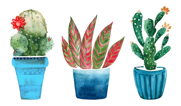 Watercolor illustration of cacti in pots Premium Photo