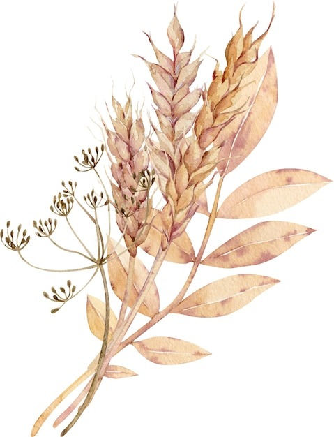 Watercolor illustration of ears of wheat with dill flower and yellow leaves. Premium Photo