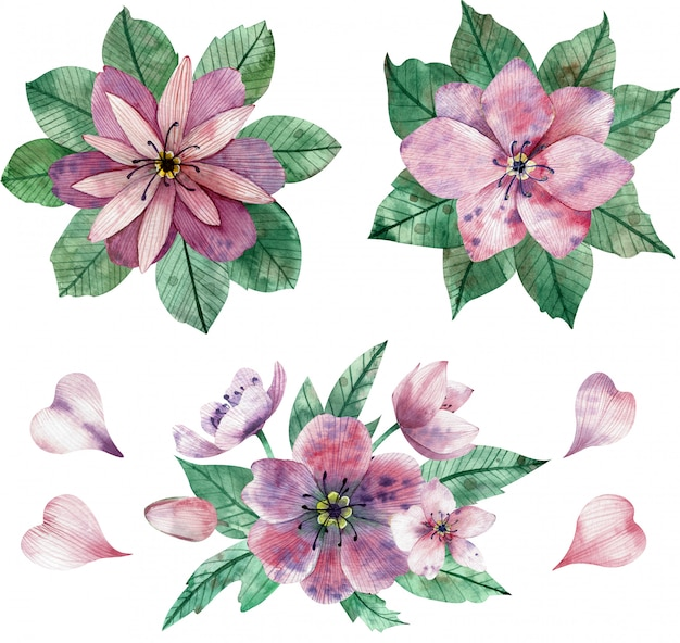 Watercolor illustration of pink flower compositions and elements Premium Photo