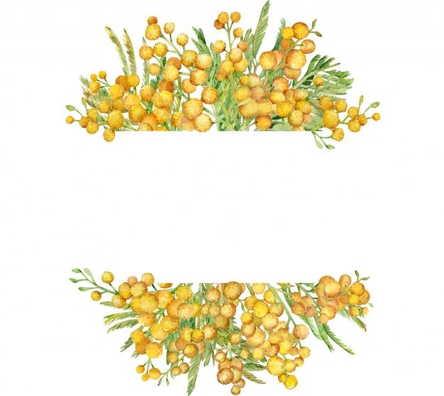 Акварель мимоза кадр. желтая весенняя цветочная рамка. рисованной иллюстрации Premium Фотографии