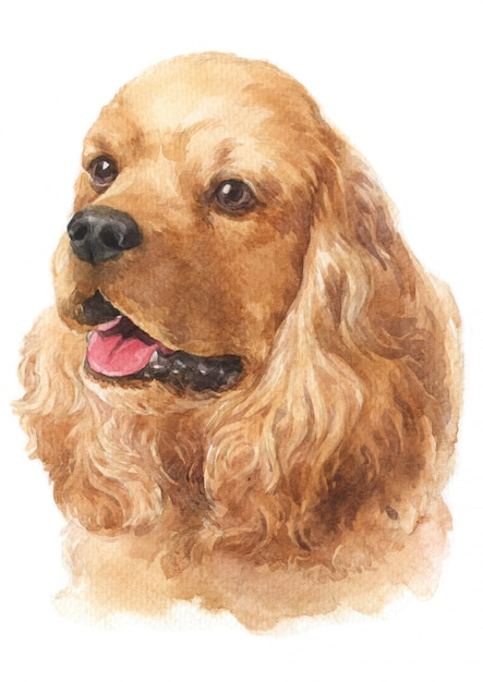 Watercolor painting of american cocker spaniel Premium Photo