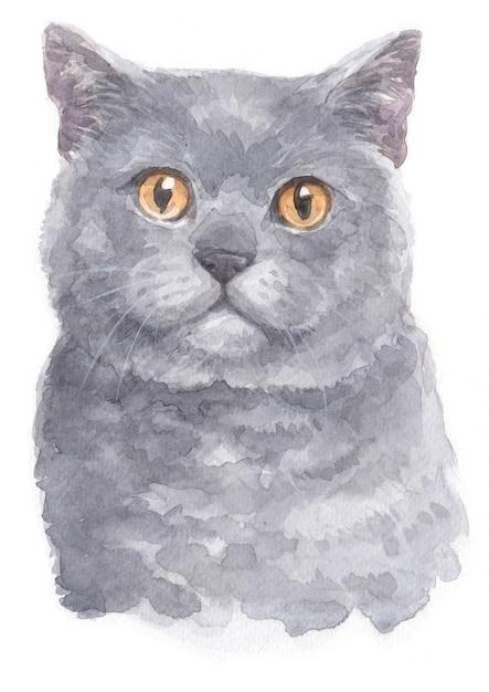 Watercolor painting of british shorthair Premium Photo