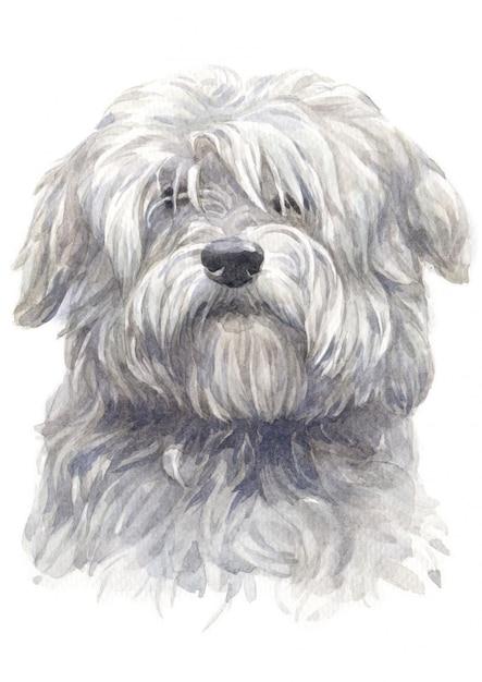 Watercolor painting of coton du tulear white dog Premium Photo