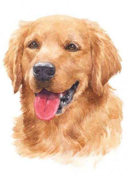 Watercolor painting of dogs, golden hairs golden retriever Premium Photo