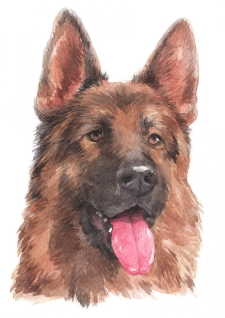 Watercolor painting of german german shepherd Premium Photo