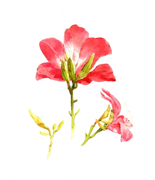 Watercolor painting of leaves and flower, on white background Premium Photo