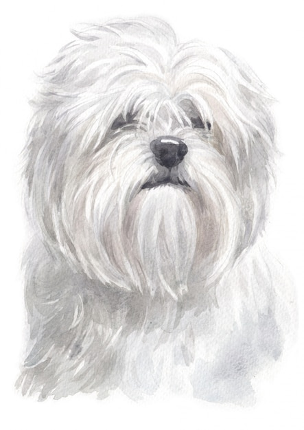 Watercolor Painting Of Lhasa Apso Premium Photo