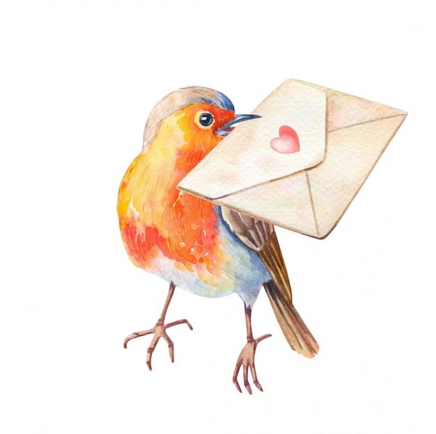 Акварель робин птица erithacus rubecula. акварель рисованной иллюстрации. Premium Фотографии