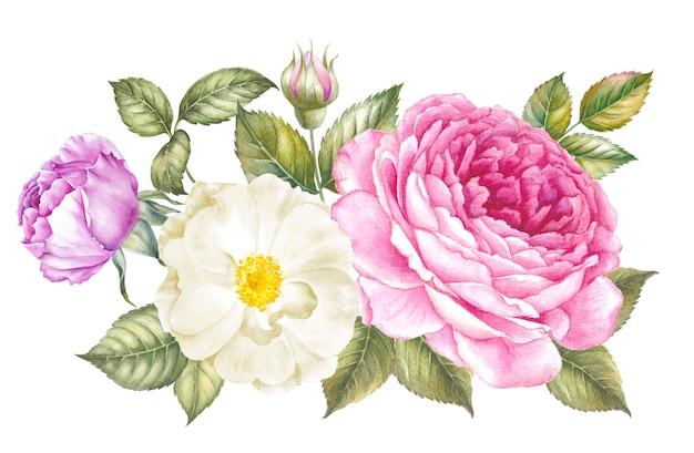 Watercolor rose for wallpaper design. Premium Photo