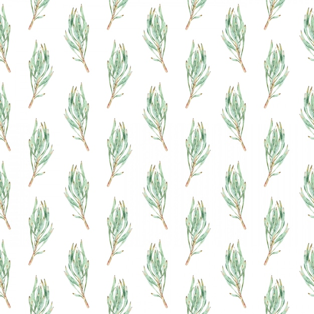 Watercolor seamless pattern of green protea leaves. Premium Photo