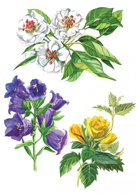 Акварельный набор цветов Premium Фотографии