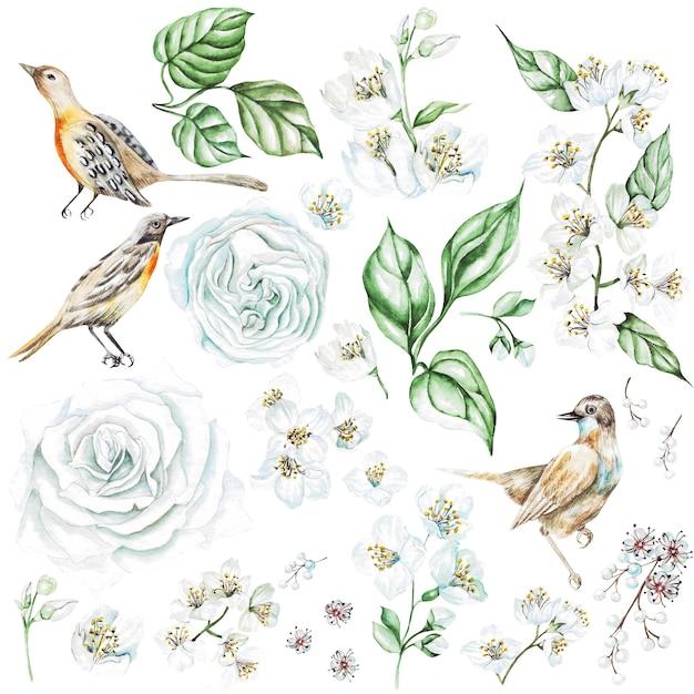 장미와 재스민 꽃, 새와 수채화 세트. 삽화 프리미엄 사진