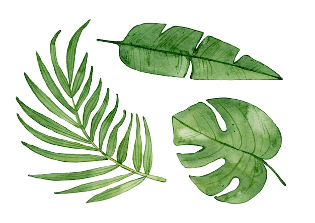 Premium Photo Watercolor Tropical Leaves Isolated No need to register, buy now! https www freepik com profile preagreement getstarted 5541960