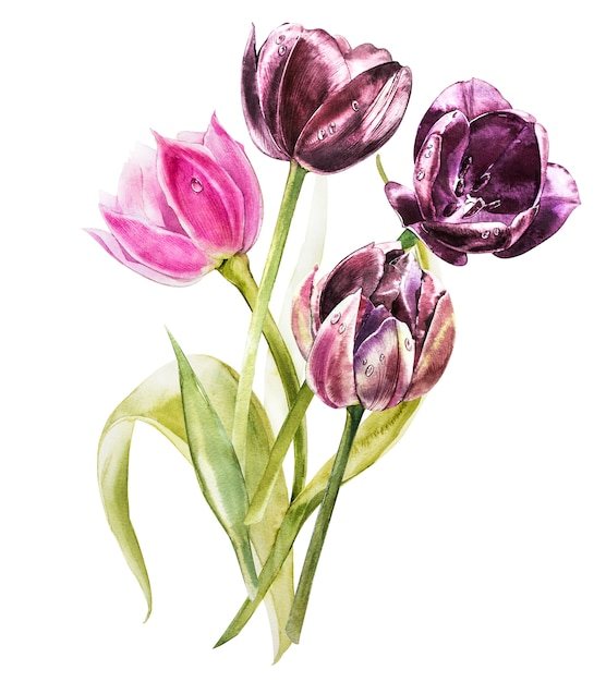 Watercolor tulips flowers. spring or summer decoration floral botanical illustration. watercolor isolated. perfect for invitation, wedding or greeting cards. Premium Photo
