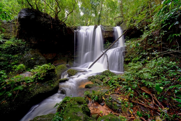 Waterfall in forest Premium Photo