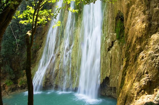 深い緑の森の滝 Premium写真