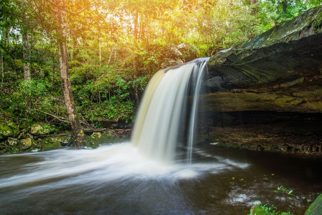 Waterfall river stream green tropical forest nature plant tree jungle Premium Photo