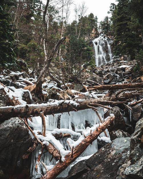 倒木と森の鍾乳石の滝 無料写真