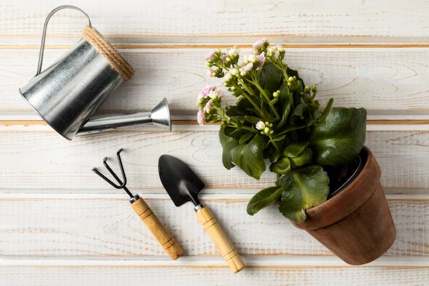 Watering can and flower pot Free Photo