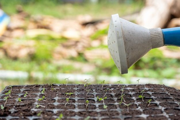 Watering can pouring water on sapling in tray Premium Photo