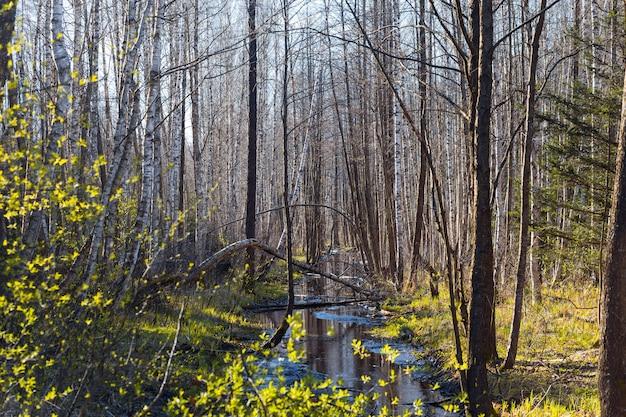 Waterlogged impassable terrain Premium Photo