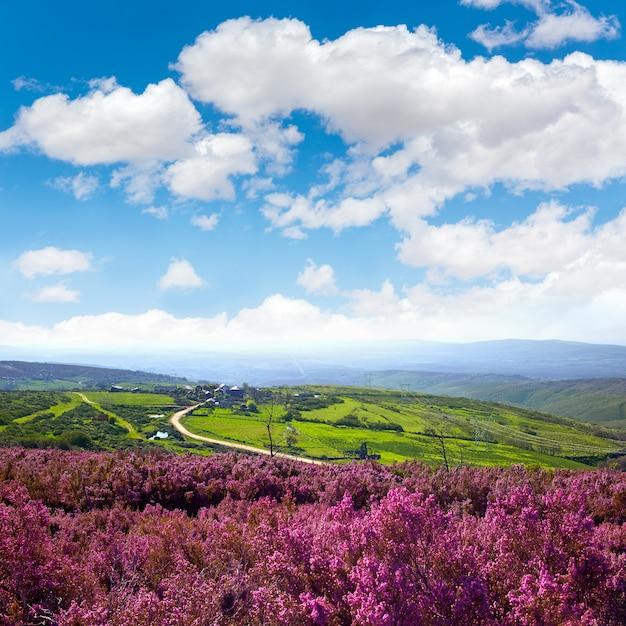 The way of saint james in leon pink mountains Premium Photo