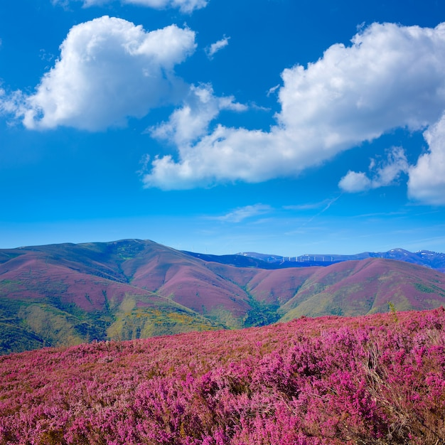 The way of saint james in leon pink mountains Premium Photo