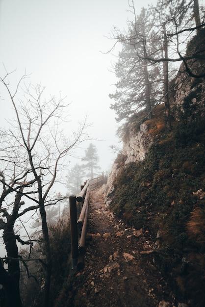 森の頂点への道 Premium写真